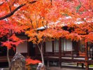 Koyo (Autumn Foliage) Japan